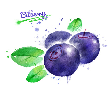 whortleberry: Watercolor illustration of bilberry