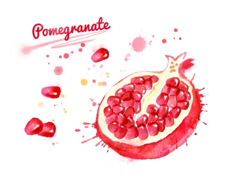 Watercolor illustration of half of pomegranate