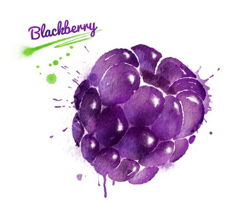 dewberry: Watercolor illustration of blackberry