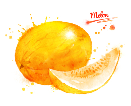 Watercolor illustration of melon Imagens