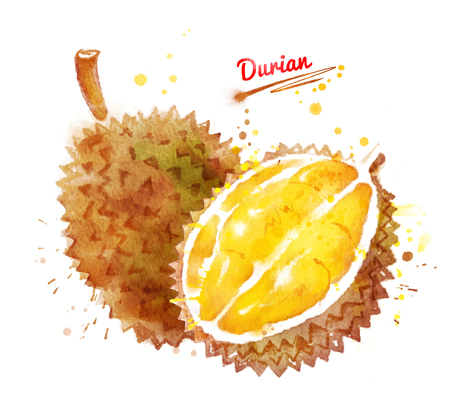 Watercolor illustration of durian