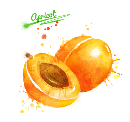 Watercolor illustration of apricot, whole and half with seed and paint smudges and splashes. Stockfoto