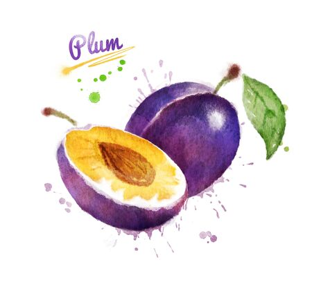 Watercolor illustration of plum, whole and half with paint smudges and splashes.