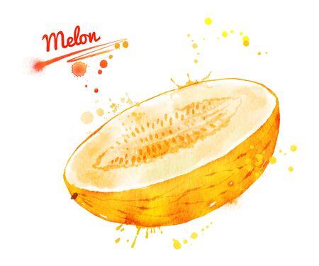 Watercolor illustration of half of melon