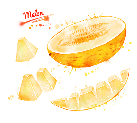 Watercolor illustration of melon Stock Photo