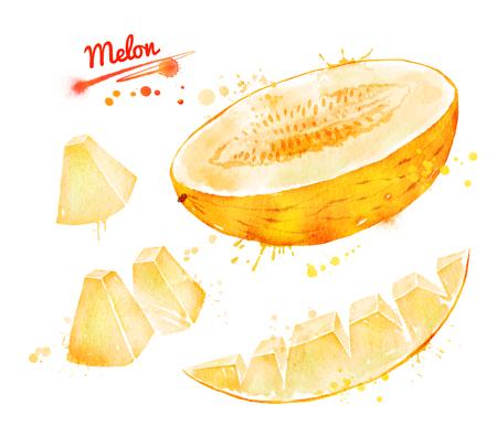 Watercolor illustration of melon Stock Illustration - 91092659