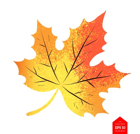 Top view vector illustration of autumn maple leaf isolated on white background.