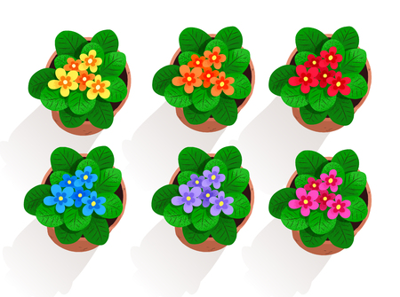 Vector collection of flowers in pot