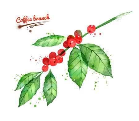 Watercolor illustration of coffee branch Stok Fotoğraf