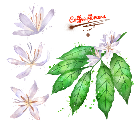 Watercolor set of coffee branch with flowers Stok Fotoğraf