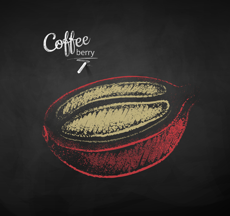 Vector chalk drawn sketch of half cut coffee berry with bean on chalkboard background.