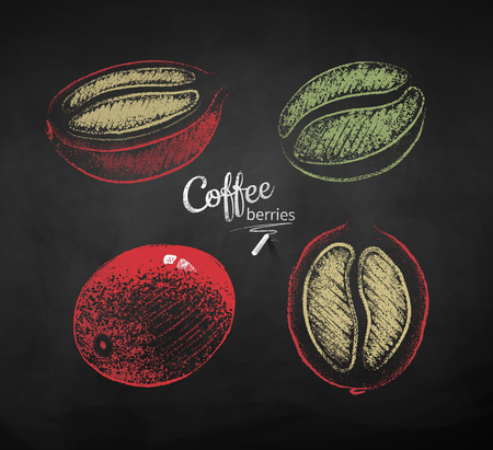 Vector chalk drawn sketches set of whole and half cut coffee berry with bean on chalkboard background.