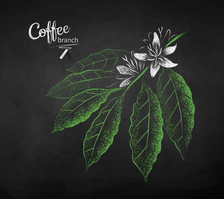 Vector chalk drawn sketch of coffee branch