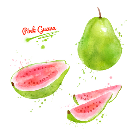 Watercolor illustration of Pink Guava Imagens