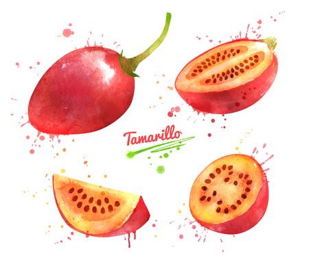 Watercolor hand drawn illustration of Tamarillo fruit whole and slices. With paint splashes. Stock Photo