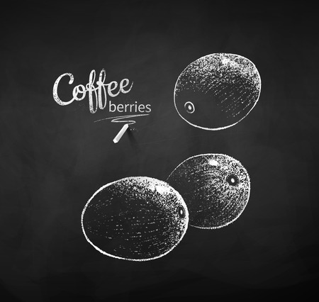 Black and white vector chalk drawn sketch of whole coffee berries on chalkboard background.