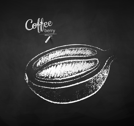 Black and white vector chalk drawn sketch of half cut coffee berry with bean on chalkboard background.