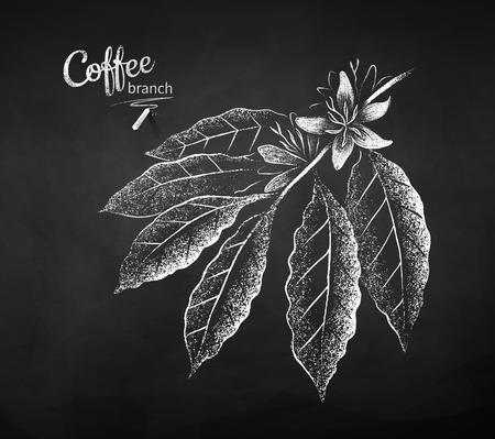 Black and white vector chalk drawn sketch of coffee branch with flowers and leaves on chalkboard background. Ilustracja