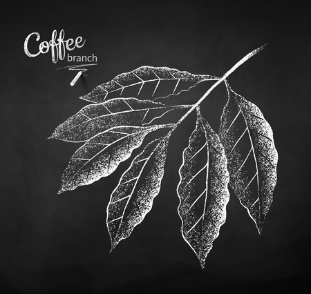 Black and white vector chalk drawn sketch of coffee branch with leaves on chalkboard background. 向量圖像