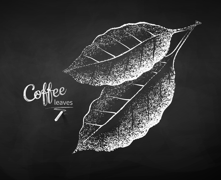 Black and white vector chalk drawn sketch of coffee leaves on chalkboard background.