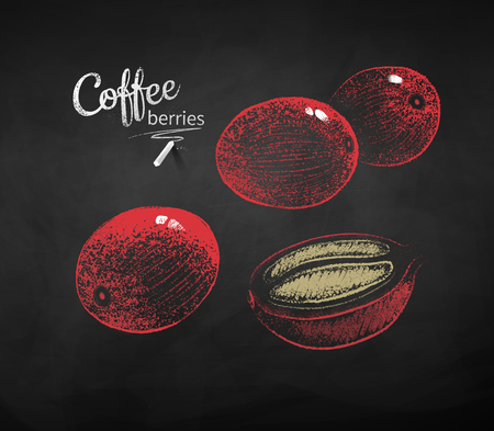 Vector chalk drawn sketches set of coffee berries on chalkboard background.