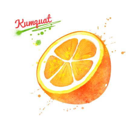 Watercolor illustration of half of Kumquat fruit Imagens