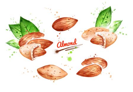 Watercolor illustration of almond nut Stock Illustration - 123051237