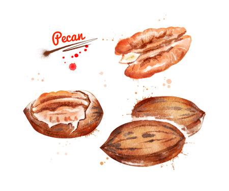Watercolor illustration of pecan nut Stockfoto