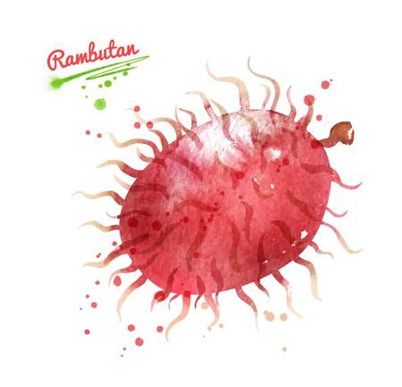 Watercolor hand drawn illustration of whole Rambutan fruit. With paint splashes.