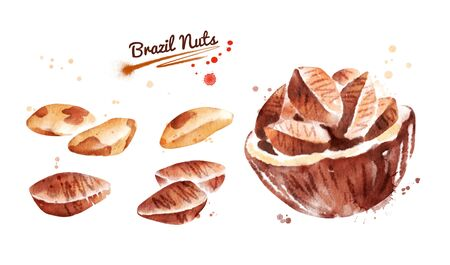 Watercolor illustration set of brazil nut, peeled and unpeeled paint smudges and splashes. Stock Photo