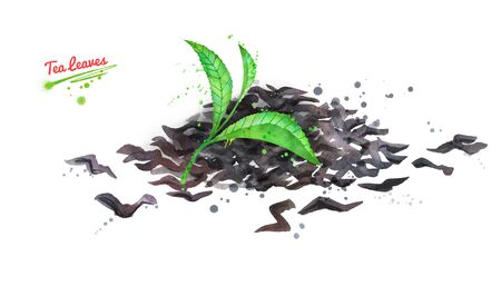 Watercolor hand drawn illustration of green and dried tea leaves with paint splashes. Stock Illustration - 126442466