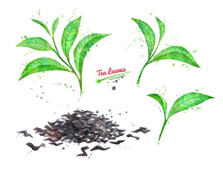 Watercolor hand drawn illustration of set green and dried tea leaves with paint splashes. Stock Illustration - 126442503