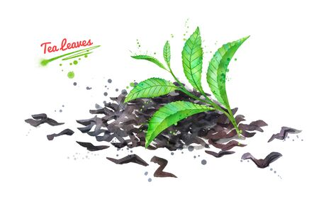 Watercolor hand drawn illustration of green and dried tea leaves with paint splashes.