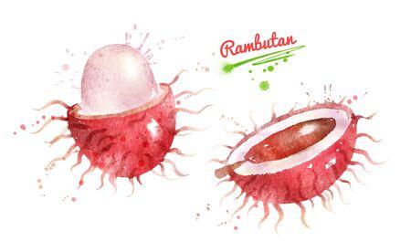 Watercolor illustration of Rambutan fruit