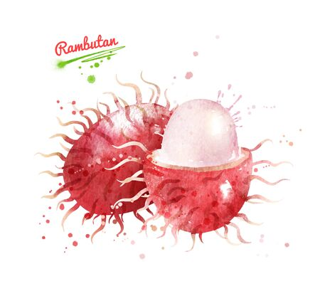 Watercolor hand drawn illustration of Rambutan fruit whole and sliced. With paint smudges and splashes.