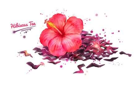 Watercolor hand drawn illustration of Hibiscus flower