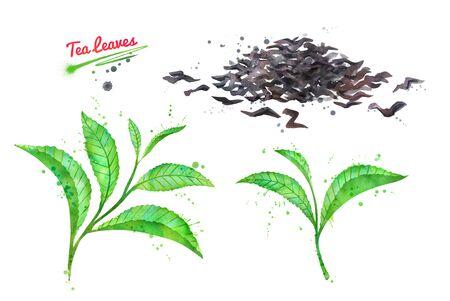 Watercolor hand drawn illustration of tea leaves