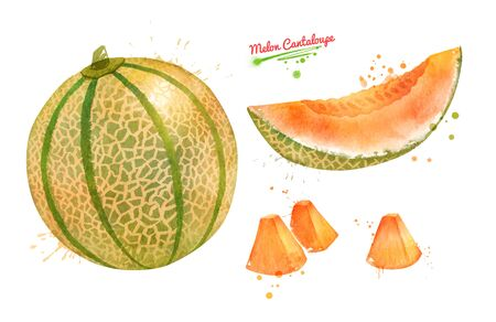 Watercolor illustration collection of Melon Cantaloupe