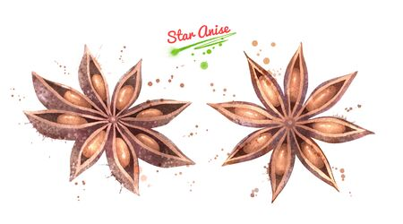 Watercolor illustration set of Star Anise Stock Photo