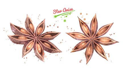 Watercolor illustration set of Star Anise Stok Fotoğraf