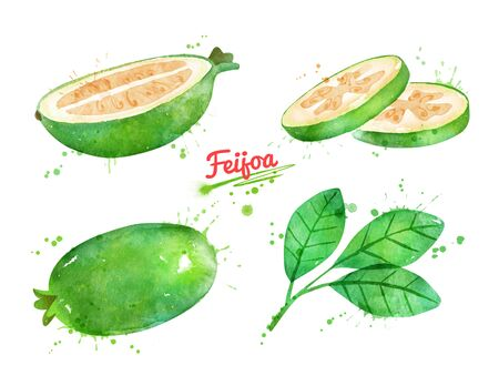 Watercolor illustration of Feijoa fruit