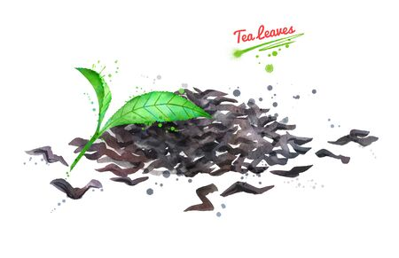 Watercolor hand drawn illustration of tea leaves