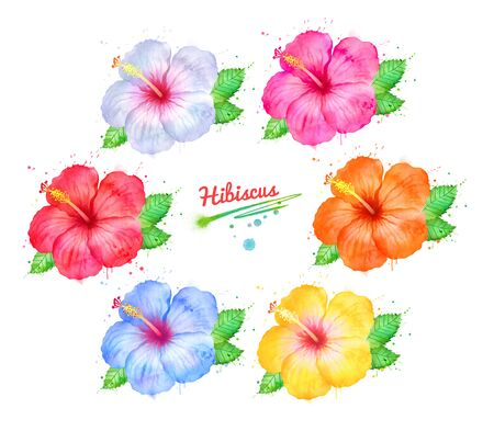 Watercolor illustration set of Hibiscus flowers