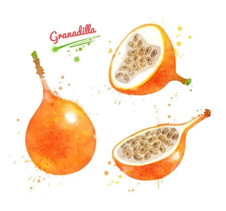 Watercolor illustration of Granadilla fruit