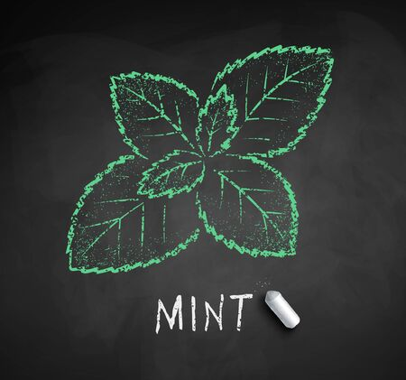 Vector chalk drawn sketch of Mint leaf Çizim