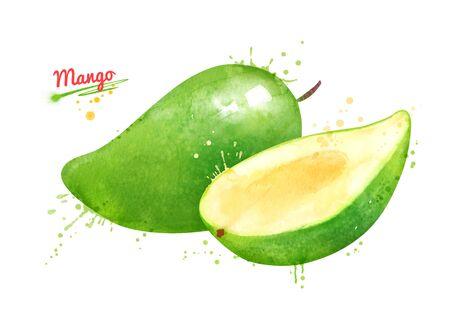 Watercolor illustration of green mango