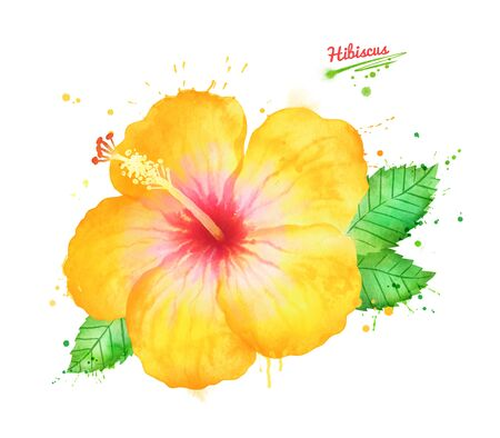Watercolor illustration of yellow Hibiscus flower