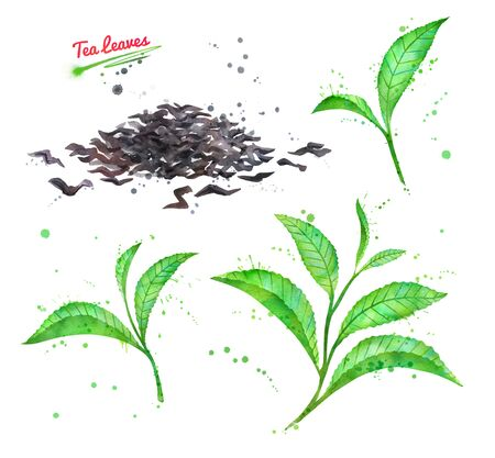 Watercolor illustration of green and dried tea leaves