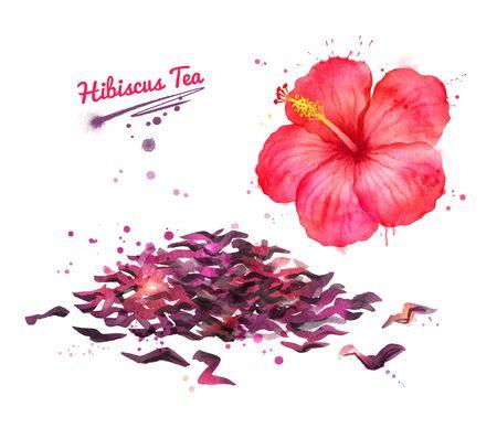 Watercolor illustration of red Hibiscus flower Zdjęcie Seryjne
