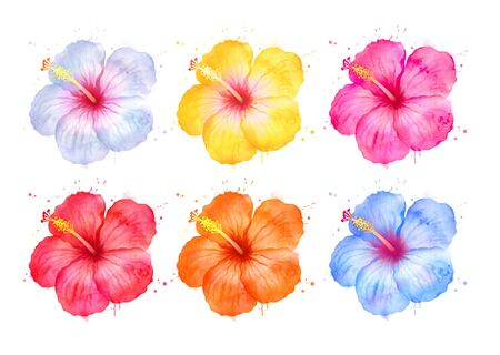 Illustration set of color variations of Hibiscus flowers 版權商用圖片
